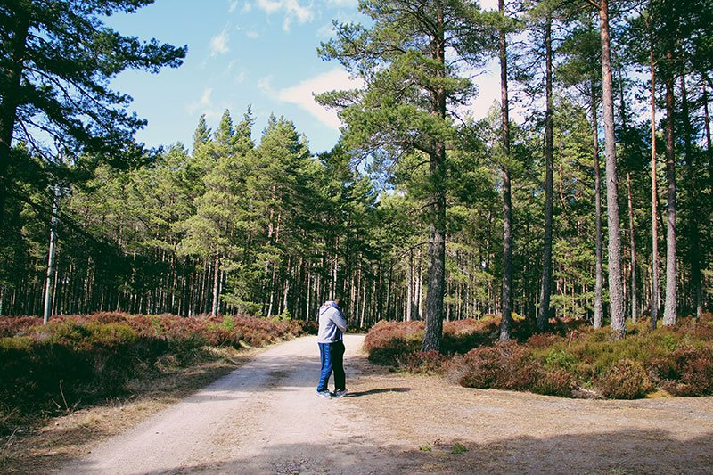 Cairngorms-national-park-foresta-scozia